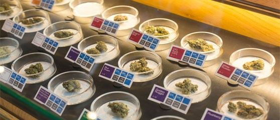 The legalisation of cannabis will be voted on in five US states in November