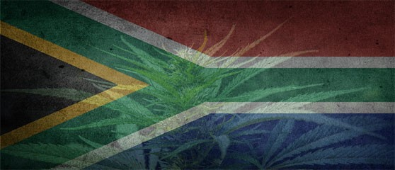 South Africa on track to Legalise Medical Cannabis