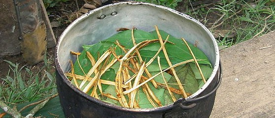 Preparation of Ayahuasca