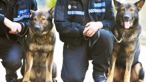 Sniffer Dogs to be Sent to South Australia State Schools to Find Drugs