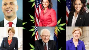 Democratic 2020 Candidates on Cannabis and Other Drug Policy
