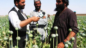 Poppies, Pomegranates, and Prohibition: the Limitations of Alternative Development