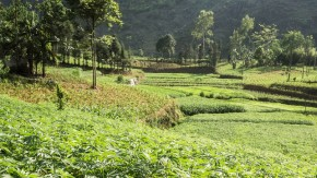 Sri Lanka to Open Asia's First Medical Cannabis Plantation