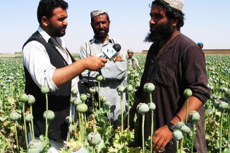 Opium poppy cultivation in Afghanistan